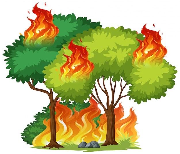 Árvore isolada em chamas