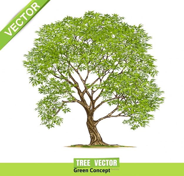 Árvore isolada no branco.