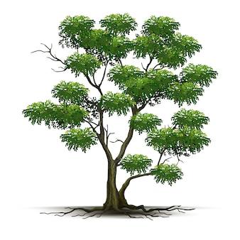 Árvore realista de ilustração isolada