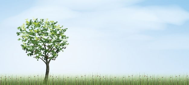 Árvore sozinha no campo verde.