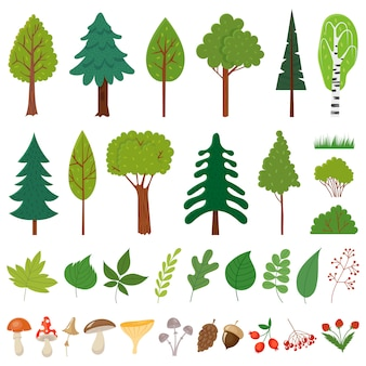 Árvores da floresta. árvore da floresta, plantas de frutos silvestres e cogumelos. conjunto de elementos florais de florestas