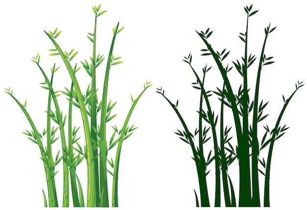 Árvores de bambu em verde
