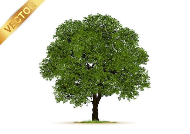 Árvores isoladas em branco