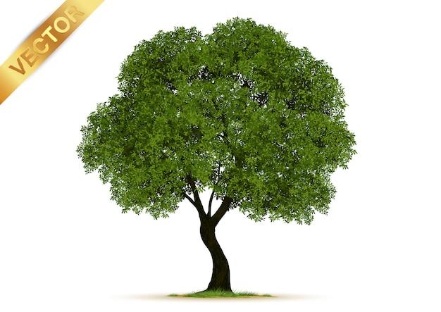 Árvores realistas isoladas