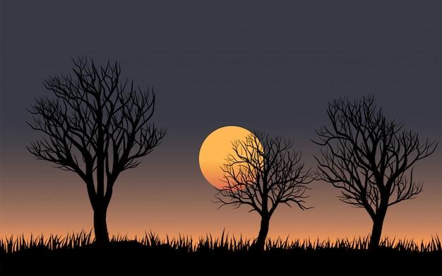 Árvores sem folha com pôr do sol e grama