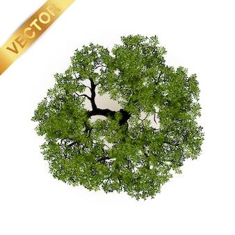 Árvores vista superior para paisagem