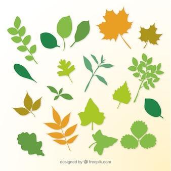 As folhas das plantas e galhos silhuetas