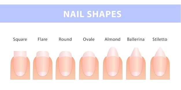 As formas mais populares de unhas. diferentes tipos de unhas. guia de manicure.