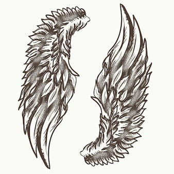 Asas de anjo, mão desenhados elementos