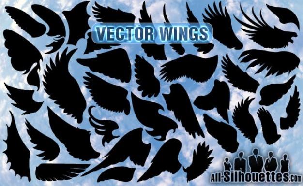Asas vector
