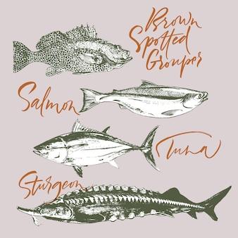 Atum, salmão, garoupa manchada marrom, esturjão