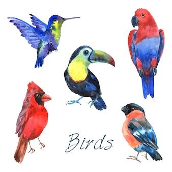 Aves de papagaio floresta tropical com bela plumagem e bicos curvados coleção de pictogramas aquarela abstrata ilustração em vetor isolado