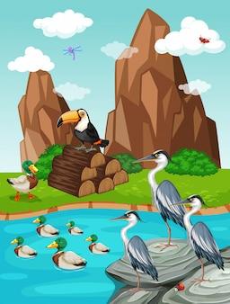 Aves e patos à beira da lagoa