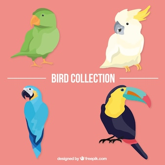 Aves tropicais embalar
