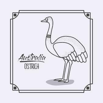 Avestruz australiana em moldura e silhueta monocromática