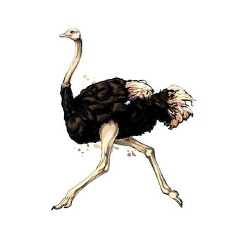 Avestruz de um toque de aquarela, desenho colorido, realista. ilustração vetorial de tintas
