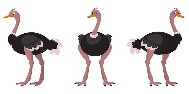 Avestruz em diferentes poses.