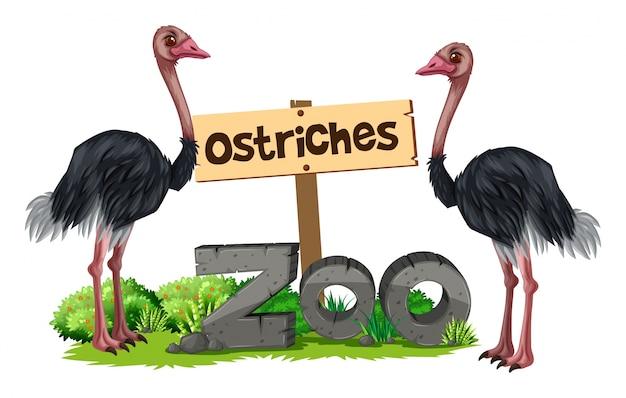 Avestruz no zoológico