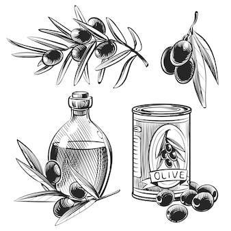 Azeitonas e garrafas de azeite de mão desenhada