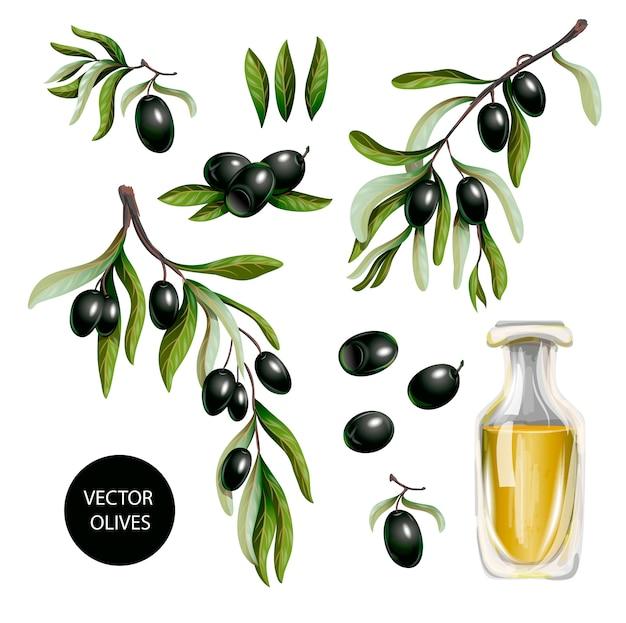 Azeitonas pretas e azeite isolado