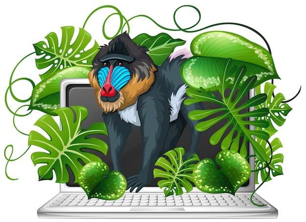 Babuíno na tela do computador