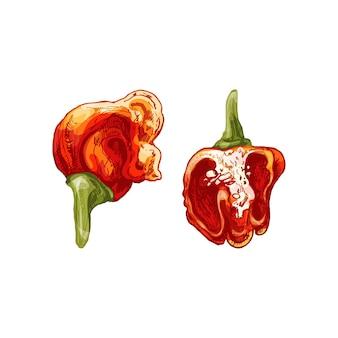 Bafo de dragão inteiro e meio pimenta. ilustração em vetor vintage cor para incubação. isolado em um fundo branco. desenho desenhado à mão