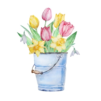 Balde azul com tulipas isoladas em branco