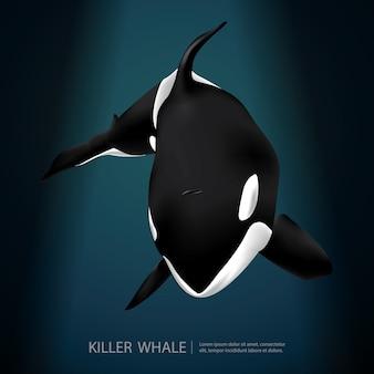 Baleia assassina sob a ilustração vetorial de mar