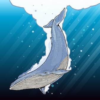 Baleia azul debaixo d'água