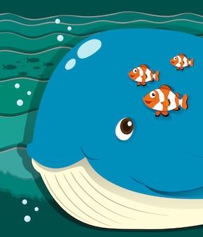 Baleia e peixe-palhaço nadando