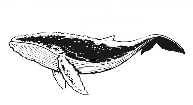Baleia em vista lateral do movimento. arte vetorial de contraste preto e branco.