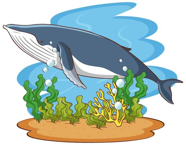 Baleia nadando no fundo do oceano