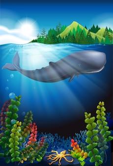 Baleia nadando sob o oceano