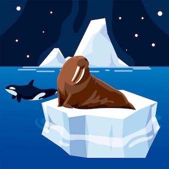 Baleia orca e animais morsas, pólo norte, e iceberg derretido, céu noturno