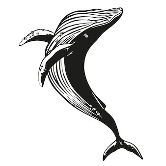 Baleia vector mão ilustrações desenhadas.