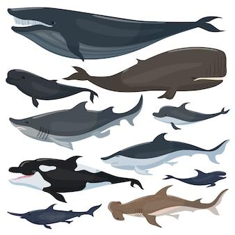 Baleias, golfinhos tubarões e outros animais mamíferos náuticos