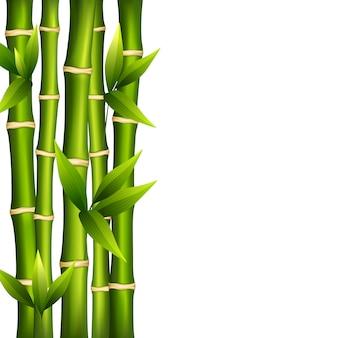 Bambu em um fundo branco