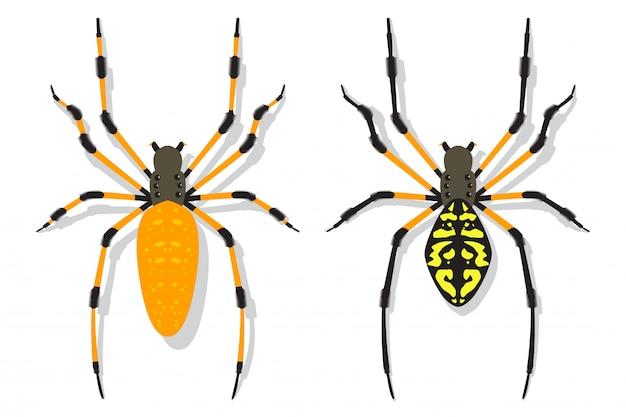 Banana aranha vector cartoon plana conjunto isolado.