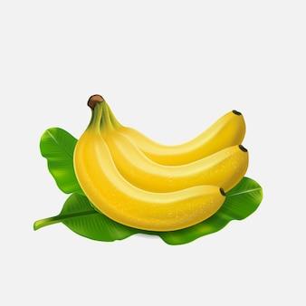 Banana frutas sobremesas exóticas plantas tropicais naturais