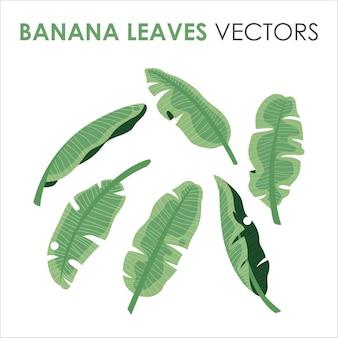 Banana tropical de cor verde deixa coleção de clipart com ilustrações planas para o verão
