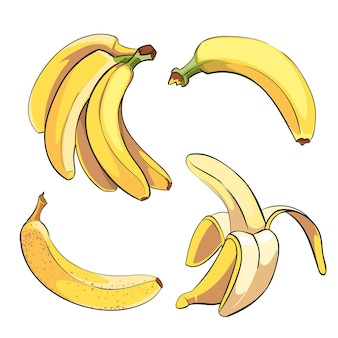 Bananas definidas em estilo cartoon. fruta alimentar doce madura, ilustração vetorial