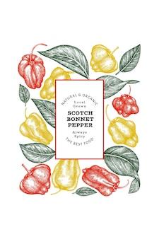 Bandeira de pimenta do estilo esboço desenhado de mão. ilustração do vetor de vegetais frescos orgânicos. modelo de design retrô de pimenta caiena