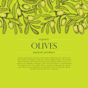Bandeira de vetor de ramo de oliveira. estilo de mão desenhada de gravura.