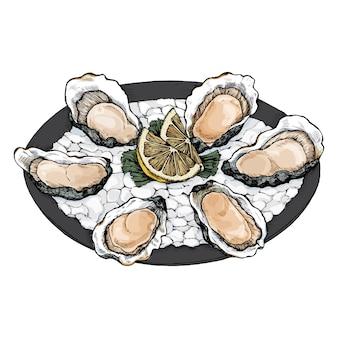 Bandeja de bivalves de água salgada de ostra desenhada de mão