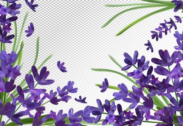 Bando de aroma de lavanda. espaço violeta lavanda. lavanda perfumada