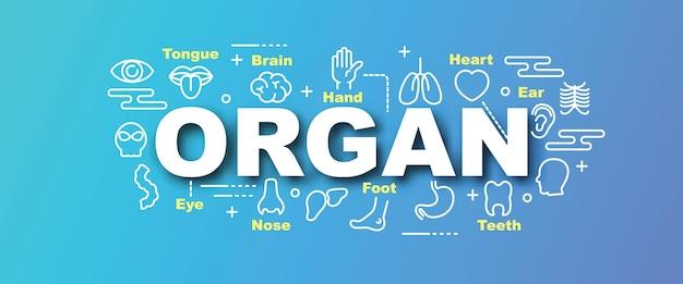 Banner da moda de vetor de órgão
