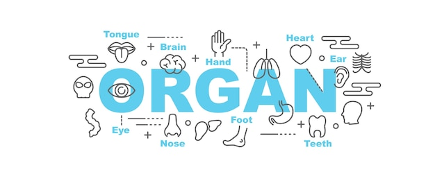 Banner de vetor de órgão