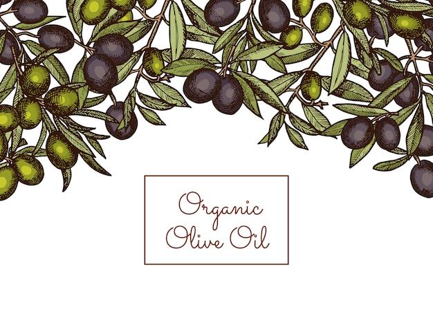 Banner e cartaz com texto de lugar e mão desenhada ramos de oliveira acima