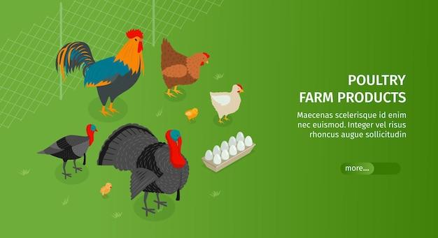 Banner horizontal isométrico da granja avícola com imagens de animais, texto editável e botão deslizante para mais informações ilustração