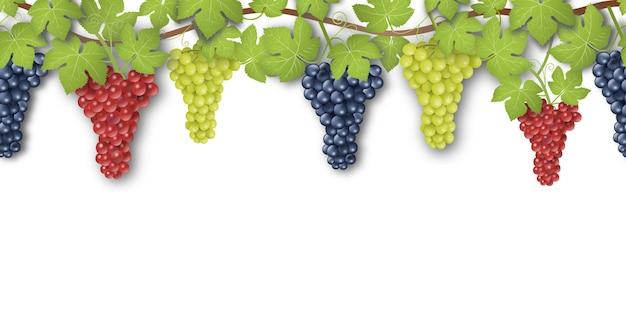 Banner sem costura com uvas e folhas